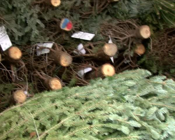Free Trees for Troops through 12-8_12652986-159532