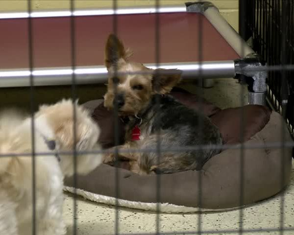 Help for dogs affected by Hurricane Harvey