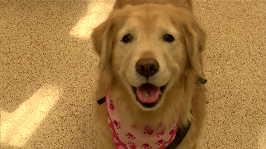 Local therapy dog in Hall of Fame class