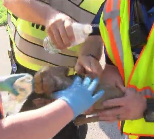 Puppy, rabbit saved from Davenport trailer fire