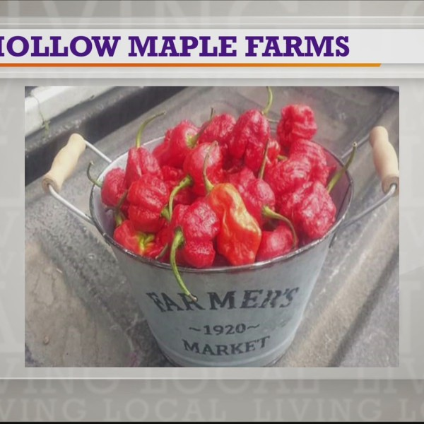Hollow Maple Farms | Farmers Market Friday