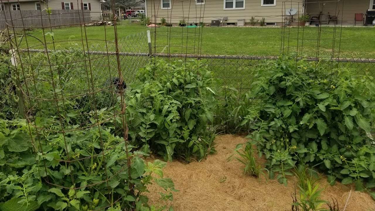 A garden created by Gold Award Girl Scout Sarah Rogers to sustain the fresh produce program for the Milan Christian Food Pantry.